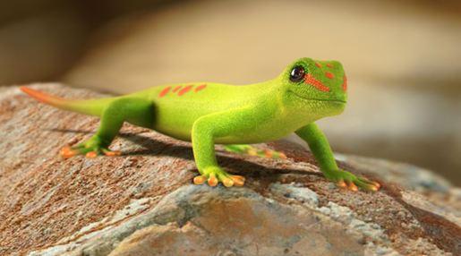 day-gecko.jpg