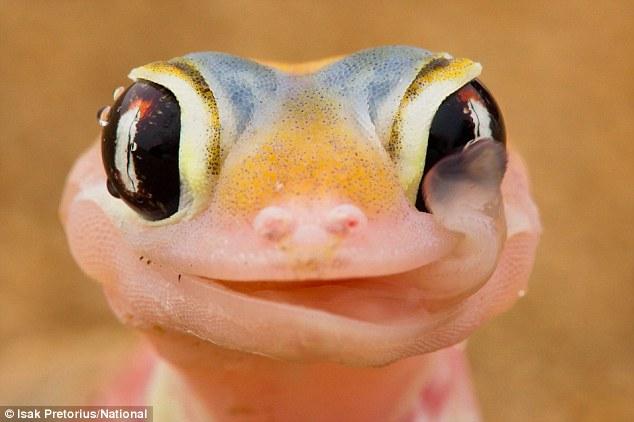 geckos1.jpg